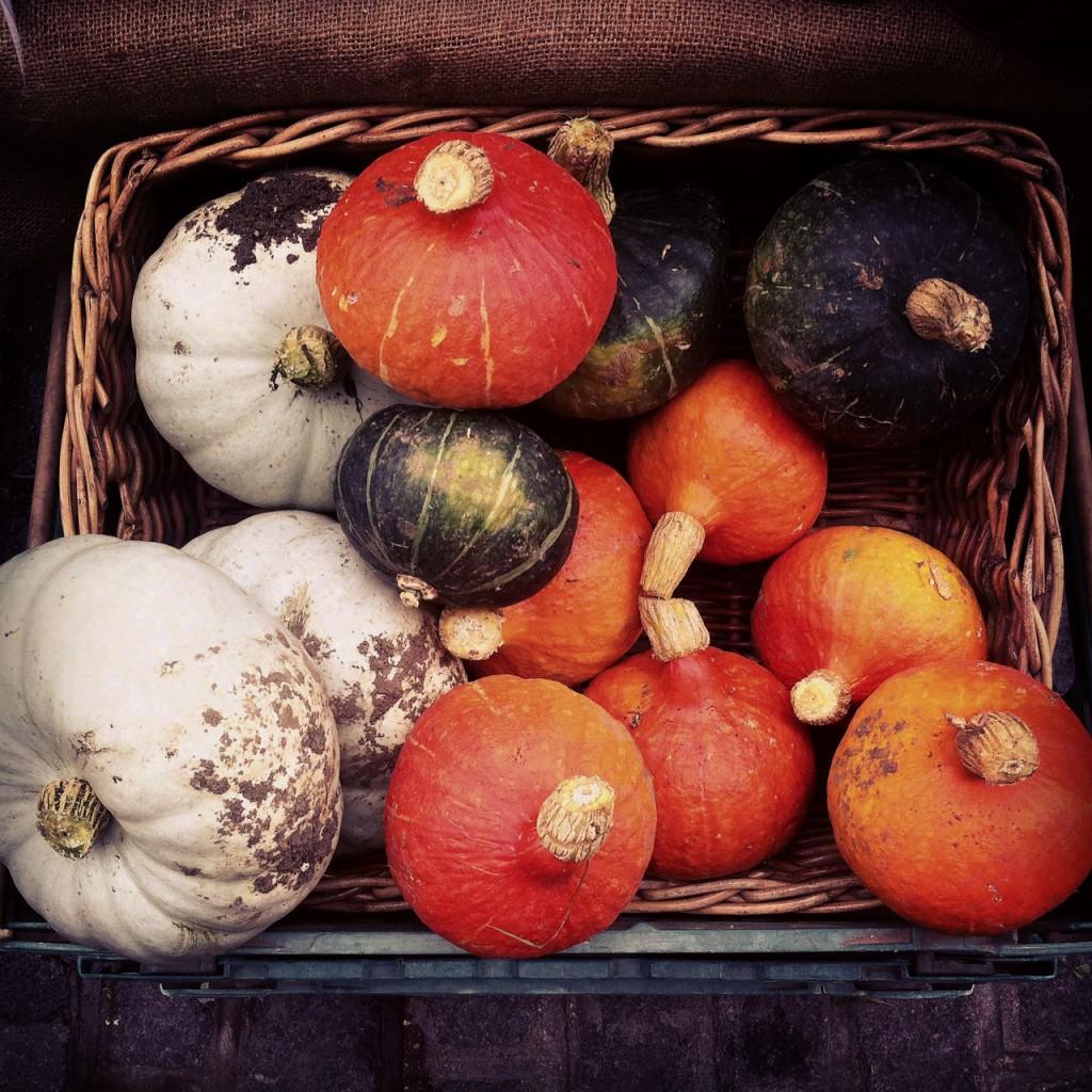 farmers market - squash