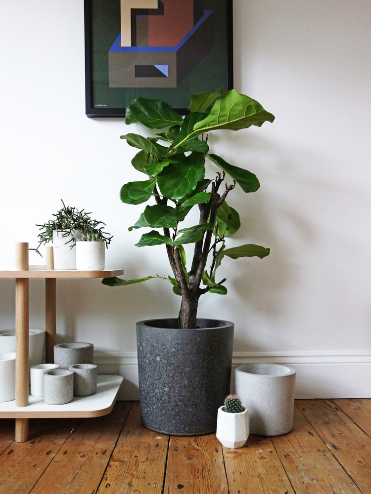 Conpot concrete plant pots from Peckham